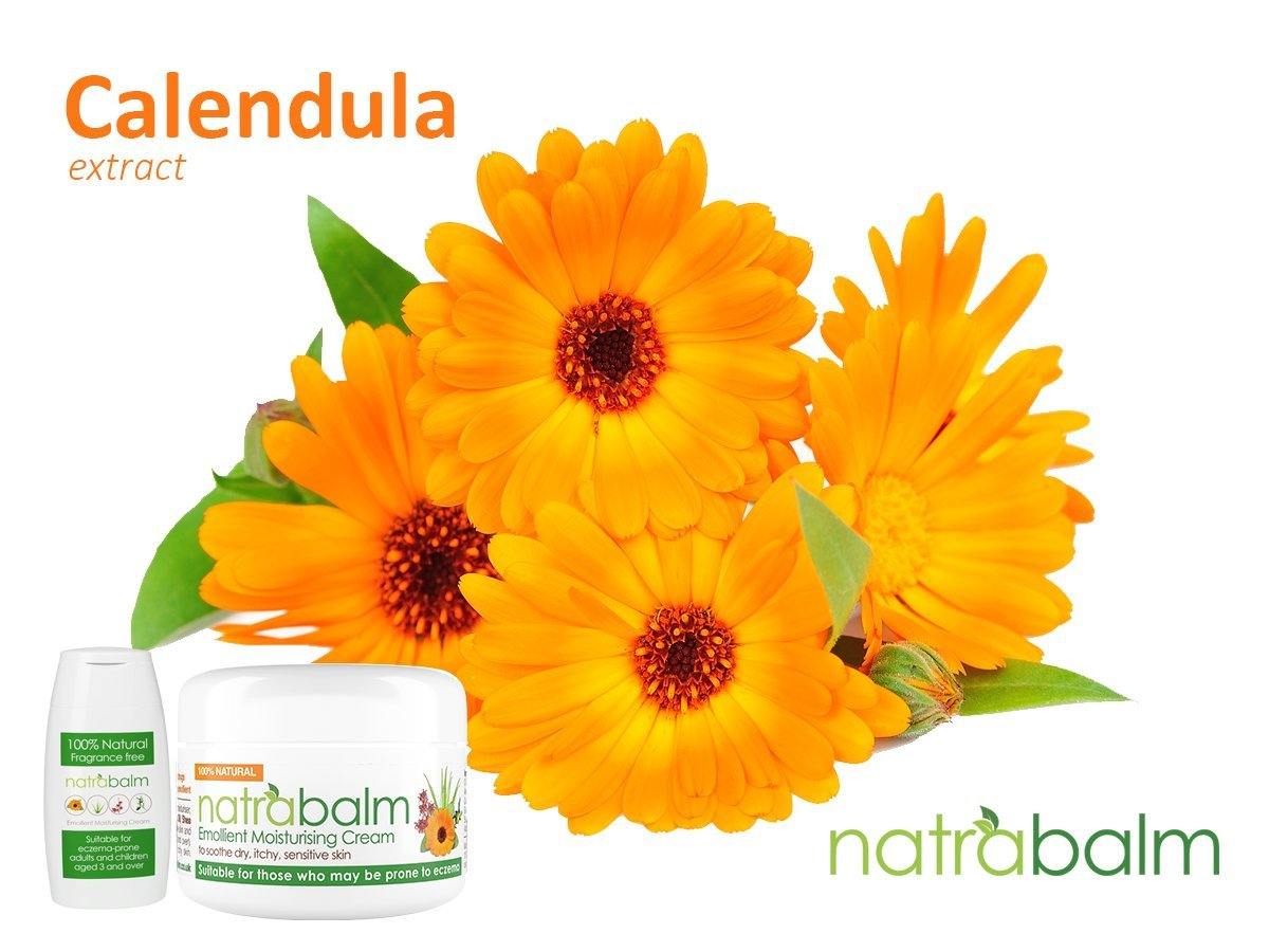 Ingredient focus: Calendula extract and its health benefits